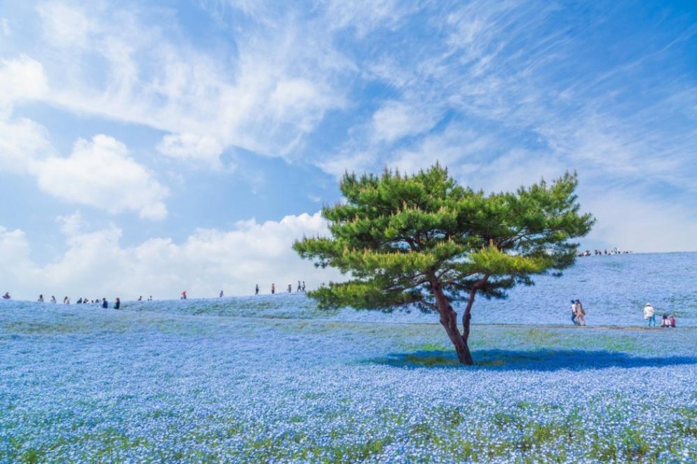 flowers japans
