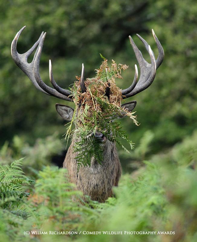 ARGINT fotografie Comedy Wildlife