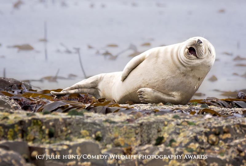 Comedy Wildlife fotografie comentată