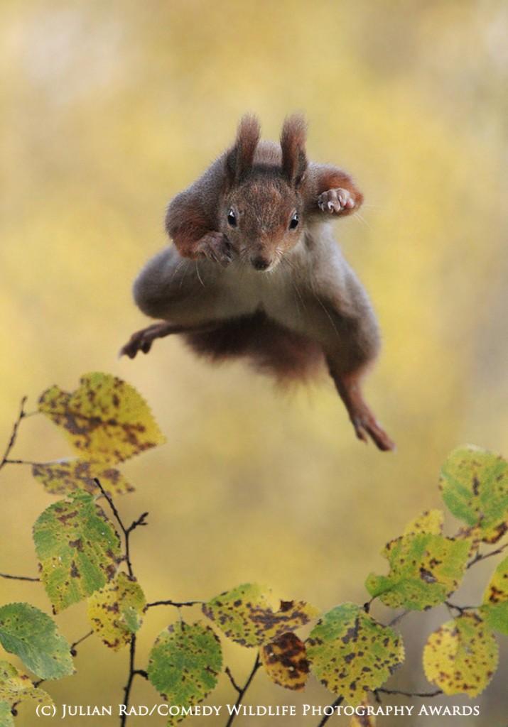 Fotografie comedy wildlife